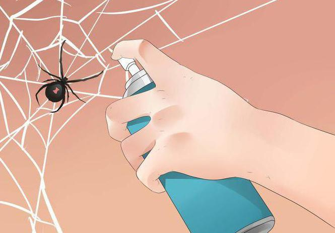 Как избавиться от пауков в доме: народные средства и химия