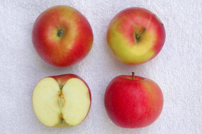 Айдаред яблоня описание