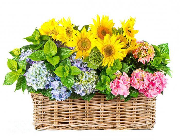 сценарий программы на праздник цветов