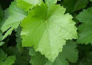 Виноград анюта