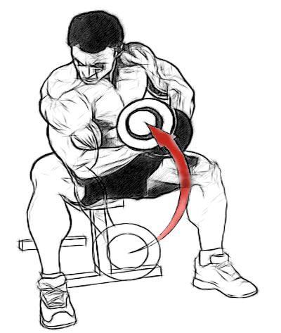 Эффективное упражнение на бицепс