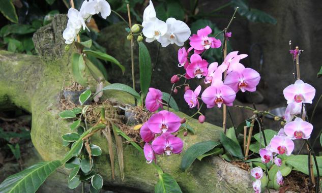 родина комнатных растений орхидея