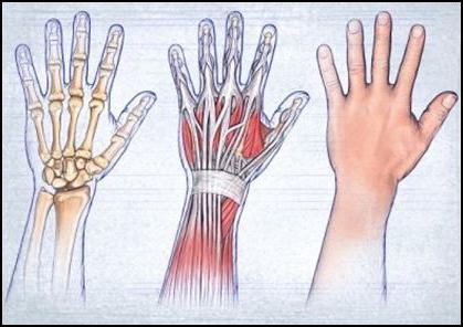 Растяжение связок кисти руки: симптомы и лечение
