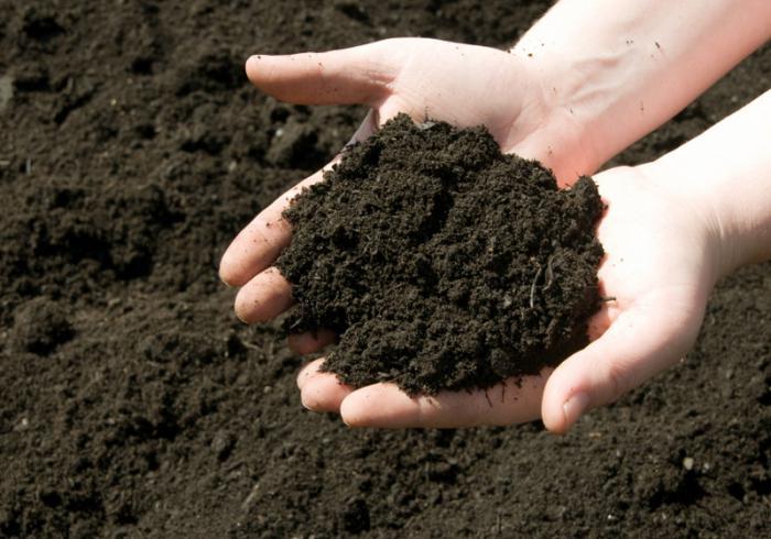 Раскисление почвы осенью