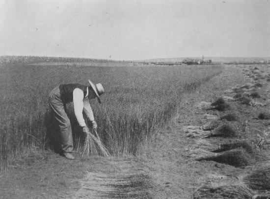 выполнен виде выращивание льна в ссср картинки строительства выбрано живописное