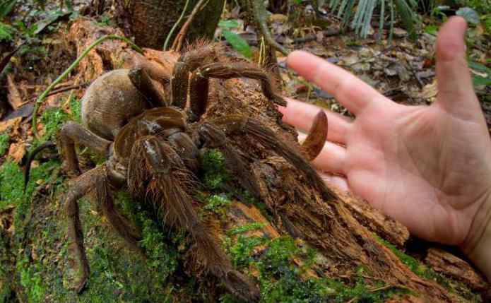 интересные факты про паукообразных