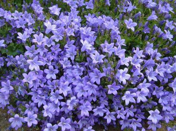 Названия и фото первых цветов