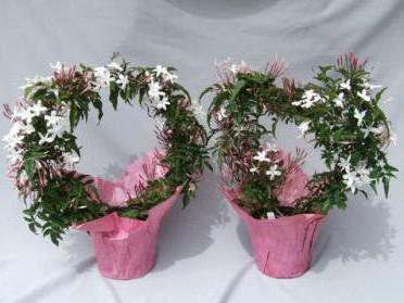 magnolie pflanzen monat