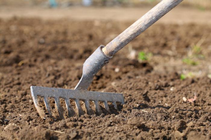 Когда сажать горох в открытый грунт семенами.
