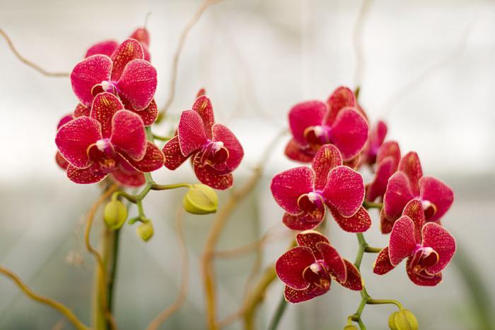 болезни орхидей  лечение