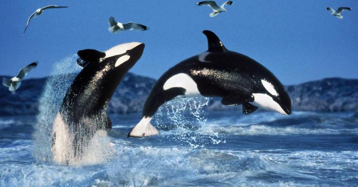 Усатые и зубатые киты.
