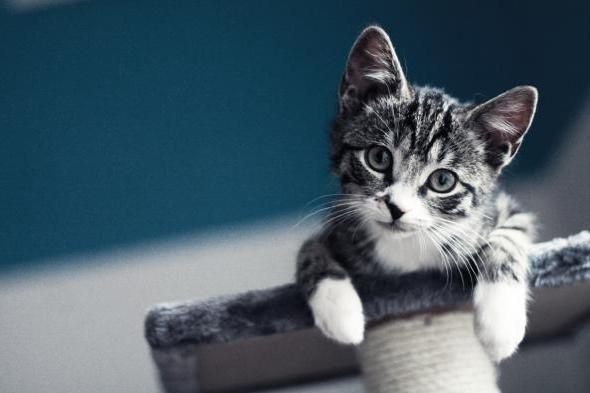 для чего кошке усы