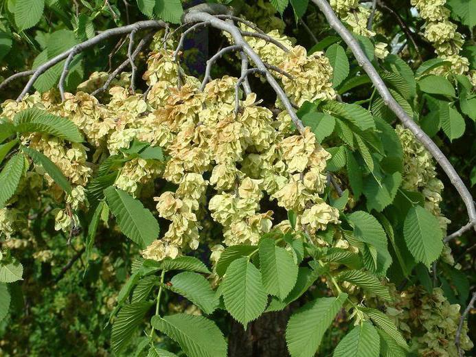 деревья названия и фото россии