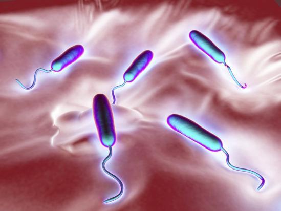 какие бактерии вызывают запах изо рта
