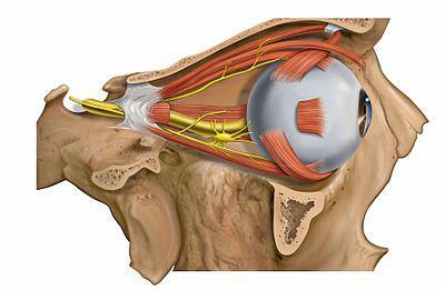 Коррекция зрения тамбов