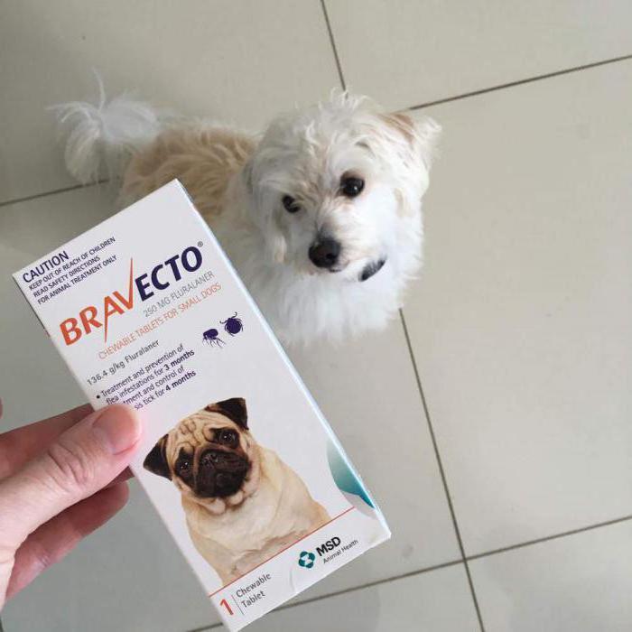 Бравекто отзывы ветеринаров инструкция