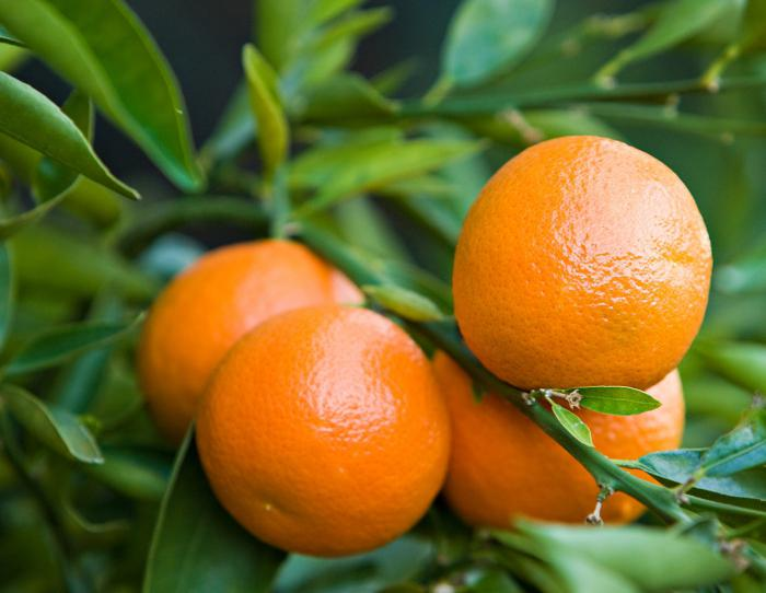 клементин фрукт