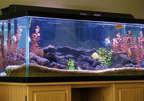 Что такое донный фильтр для аквариума своими руками фото 903