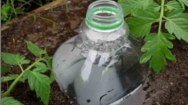 автополив в теплице своими руками из пластиковых бутылок