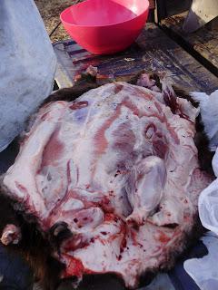 Как приготовить бобра? Мясо бобра: рецепты, фото