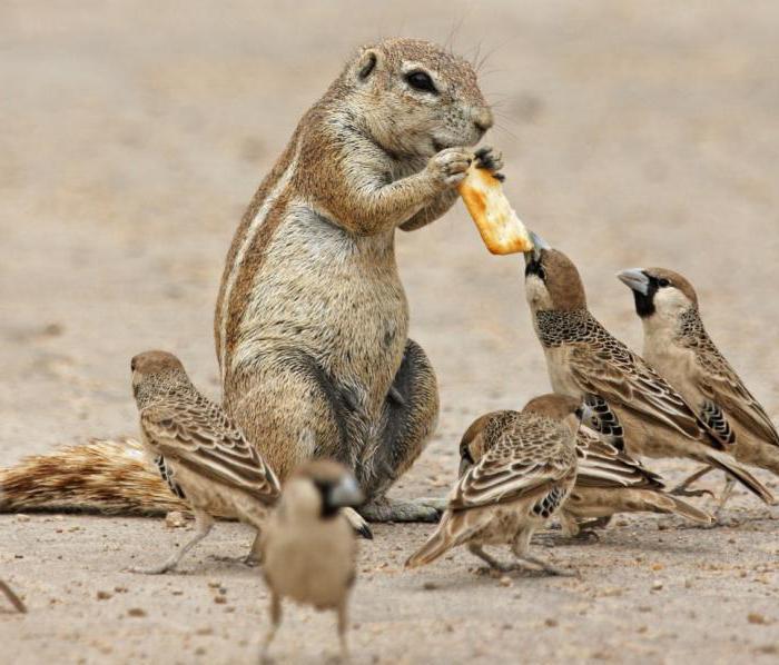 отпугиватель грызунов и птиц