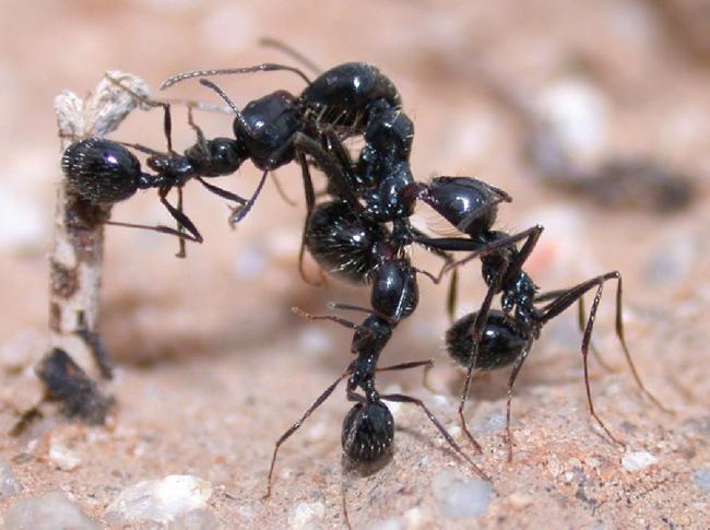 виды муравьев в мире