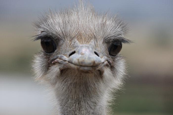 у каких животных большие глаза