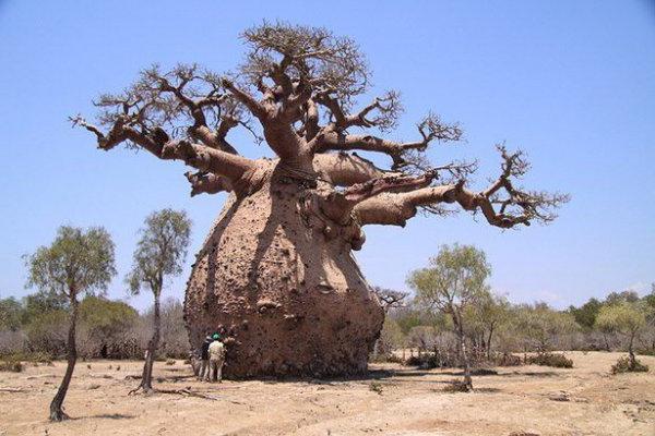смотреть фото необычные деревья