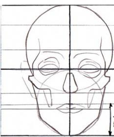 пропорции головы и тела человека теория рисования