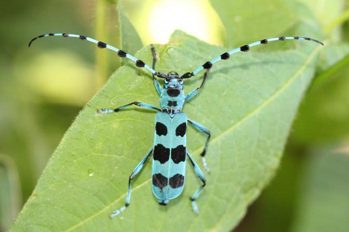 Лучик света - энциклопедия для детей: насекомые.