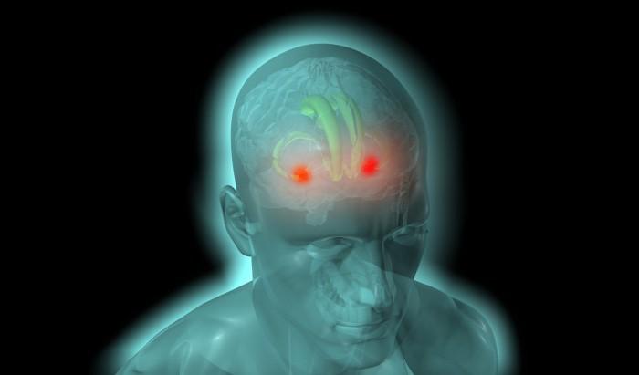 миндалевидные тела мозга