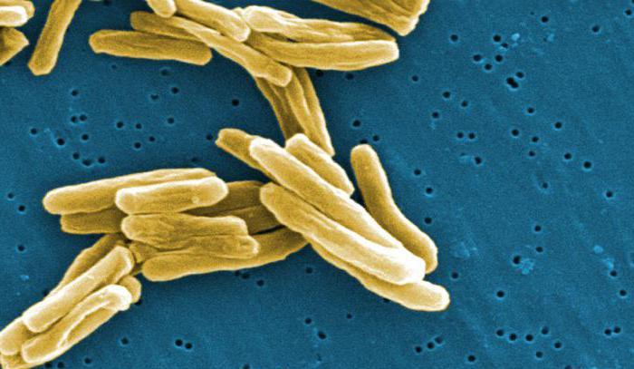 какие бактерии болезнетворные