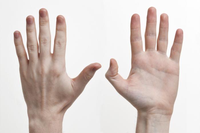 строение кисти руки сухожилия