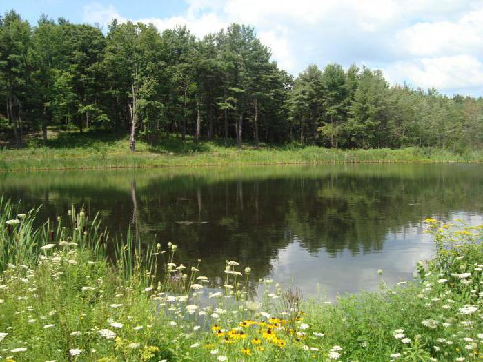 устойчивость биогеоценоза