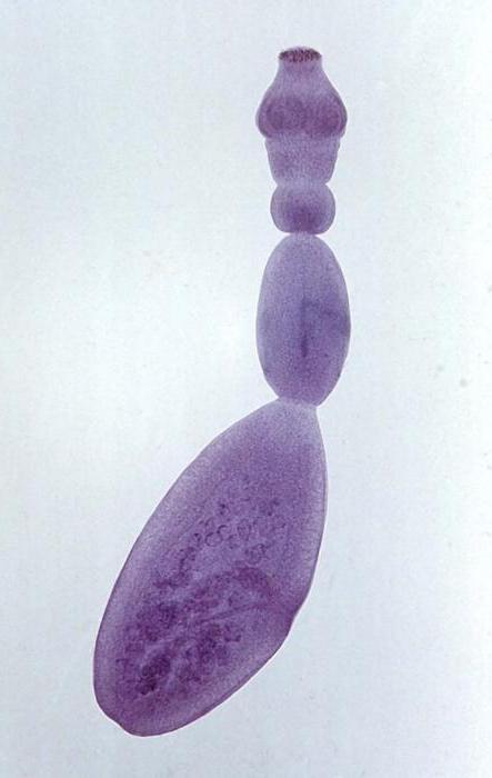 роль паразитов в природе и жизни человека
