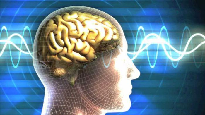 средний мозг функции