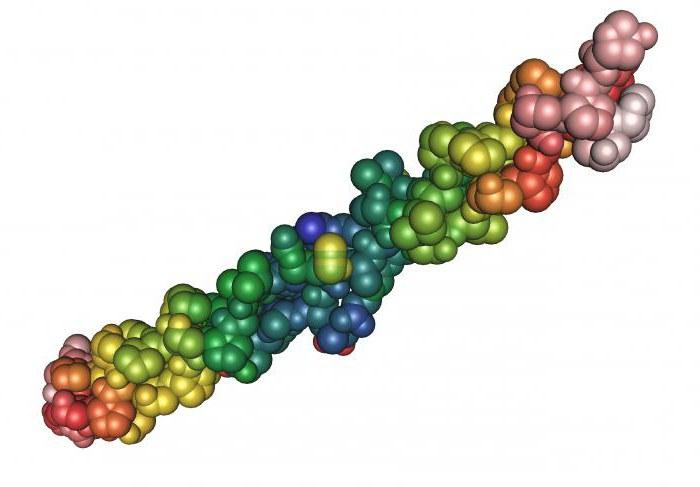 процесс биосинтеза белка и его биологическую роль