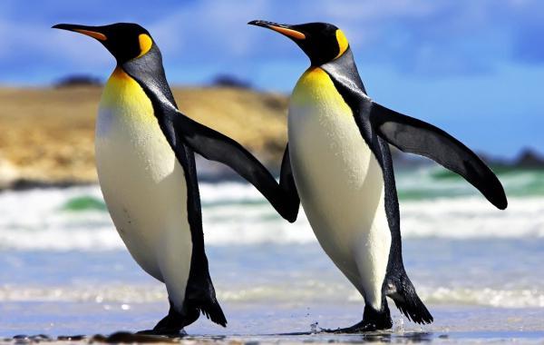 антарктида интересные факты находки открытия