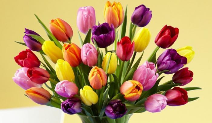 Сонник тюльпаны белые