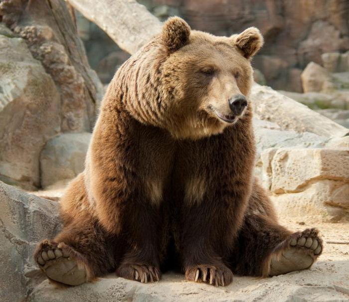 человек спасает от медведя сонник