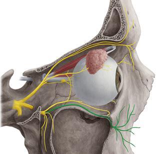 анатомия тройничного нерва его ветви