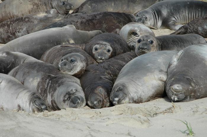 млекопиÑ'ающее морское живоÑ'ное
