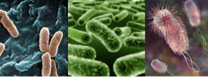 особенности бактериальной клетки