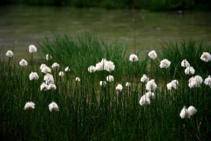 травы названия и фото