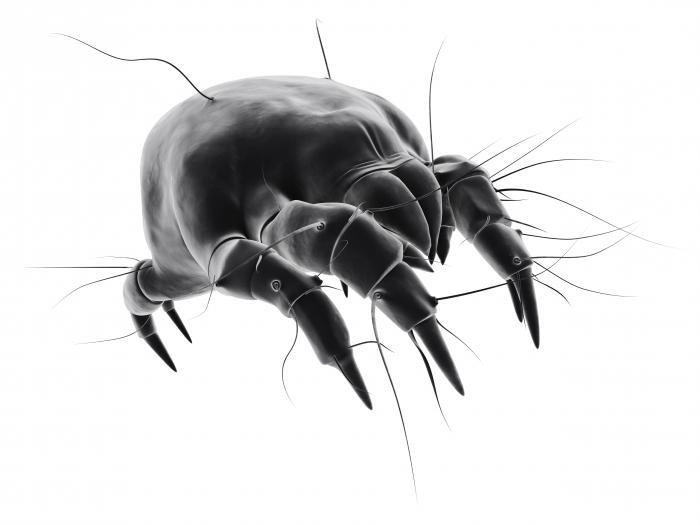 смерть от паразитов в печени
