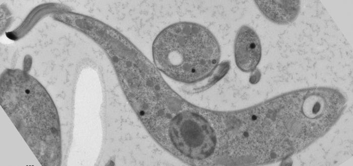 паразиты в носу признаки и причины
