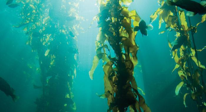 строение и жизнедеятельность водорослей