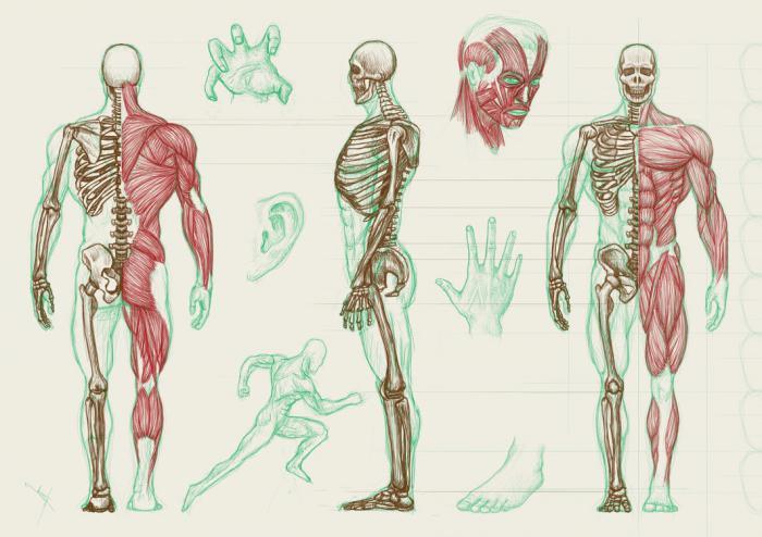 схема тел и каналов человека