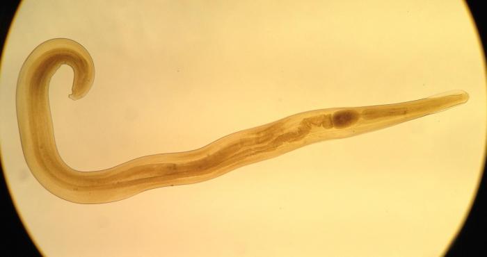 борьба с паразитическими червями