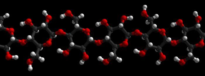 основная функция углеводов в клетке